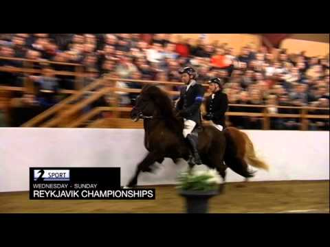The Reykjavik Championship in Horse Sports live on Channel 2 Sports!