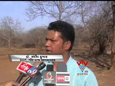VTV - WATER PROBLEM IN ANIMAL AT GIR AND JUNAGADH