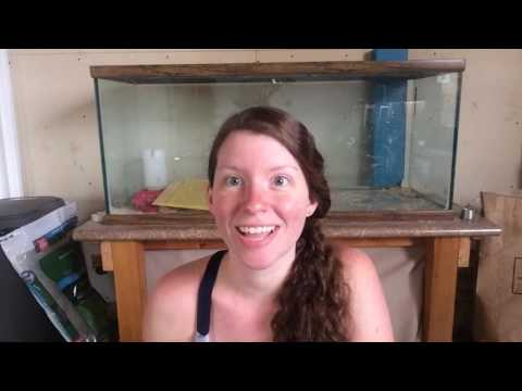 Fair Creek Farm - Fish tank chick brooder; cleaning and set up