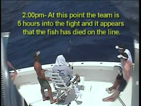 700 lb. Bluefin Tuna
