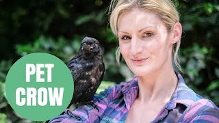 A woman who raised an orphaned baby crow says it won