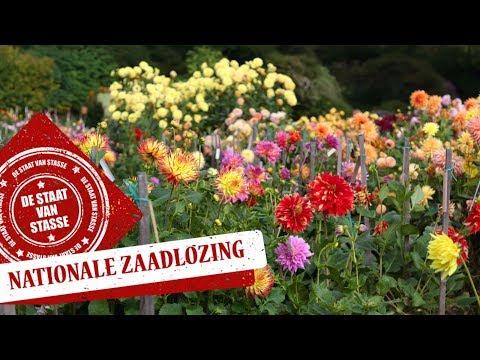 Live: De Nationale Zaadlozing