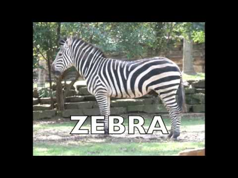 Flashcards - Animals - Long Version