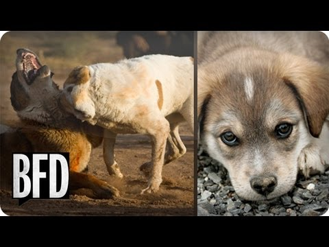How to Stop Animal Abuse and Dog Fighting | Brain Food Daily | TakePart TV
