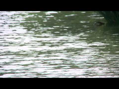 Catcall - Swimming Pool