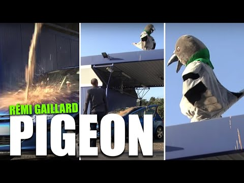 Pigeon (rémi Gaillard) - Movie Scene video