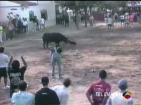 bull terrier vs toro bravo