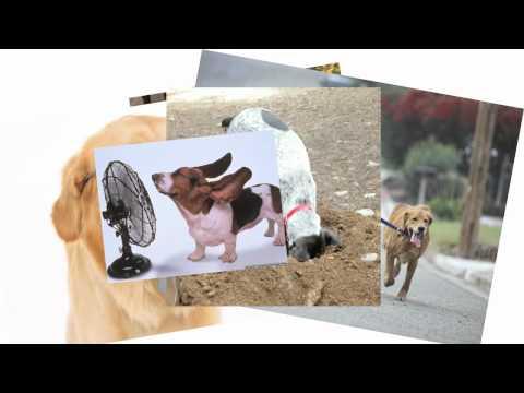 La Canzone del Cane Magico - Music Video