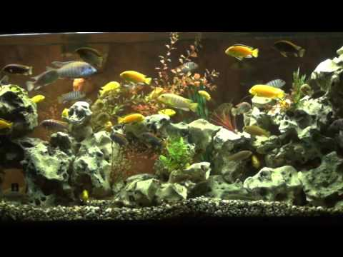 Aquarium Video 2 - Sugar Plum Dark Mix - San Antoino, TX