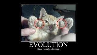 funny cat funny cat funny ecards
