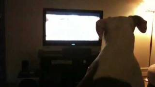 April watching Dog Whisperer