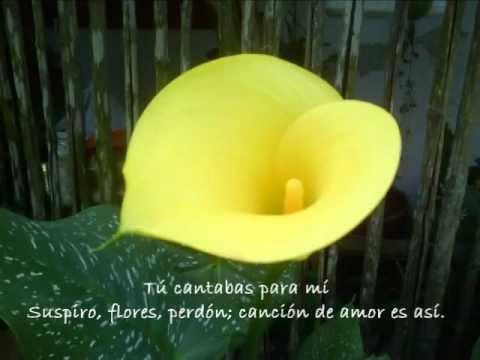 Zélia Duncan - Breve Canção De Sonho - Subtítulos Español video
