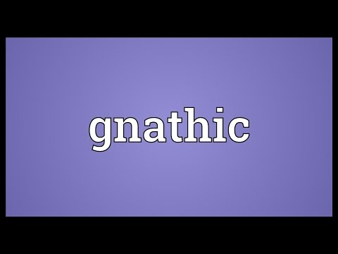 Header of gnathic