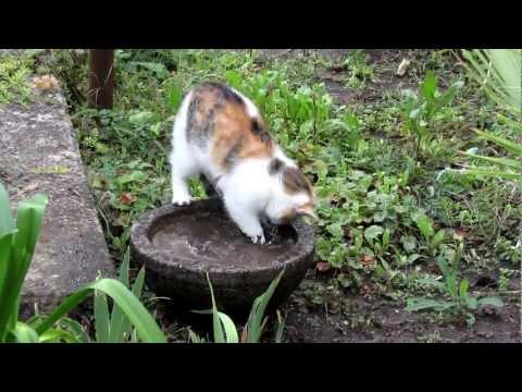 Sárban pancsoló macska