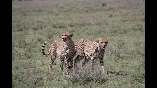 Susan's Custom Tours & Travel | Tanzania, 2014 Travel Slideshow