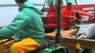 سمكة تونة عملاقة تباع بـ37 ألف دولار بطوكيو