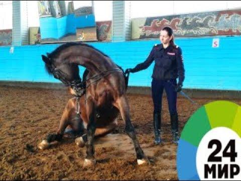Секреты конной полиции - МИР 24