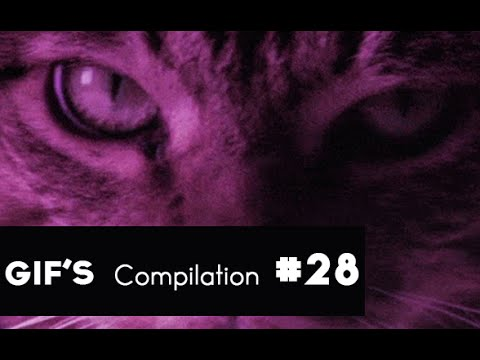 ▼ GIF's with Sound Compilation #28 August 2014 GIF Sound Mashups