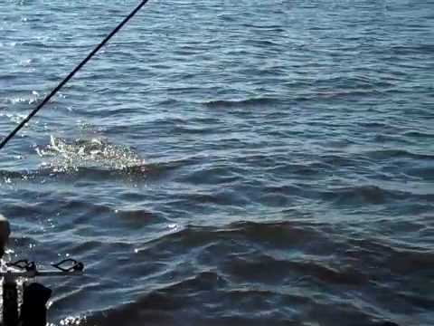 Ross barnett summer crappie techniques youtube for Ross barnett fishing report