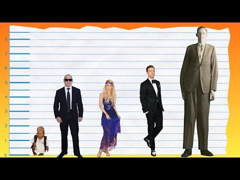 How Tall Is Pitbull? - Height Comparison!