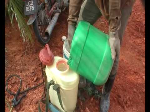 Organic Solution to Sustainable Oil Palm Farming - Pro-Fil Sawit B & F
