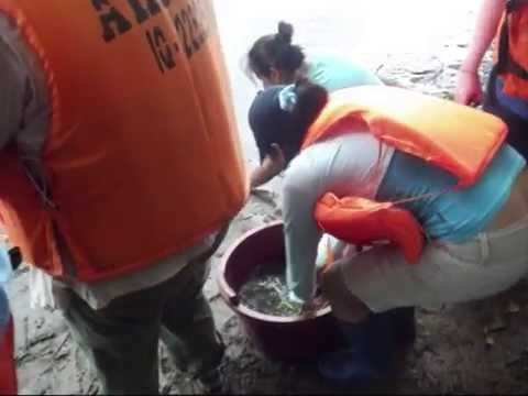 Releasing Baby Turtles into The Amazon River
