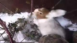 Петля на зайца своими руками