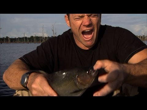 Steve Backshall on Deadly 60 - bitten by piranha