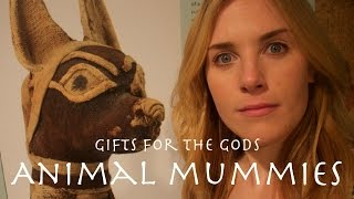 Egyptian Mummified Cats?! | Maddie Moate
