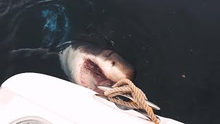 Could A New Breed Of Shark Be New Yorkers' Newest Neighbor? | SHARK WEEK
