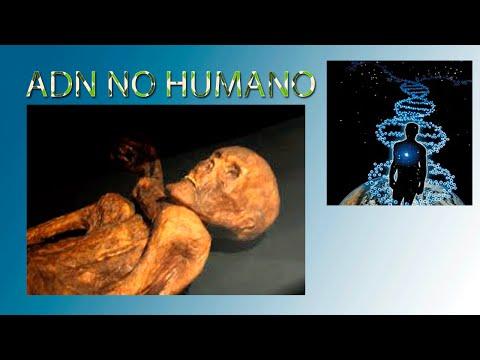 ADN no humano en una muestra de hueso de Ötzi