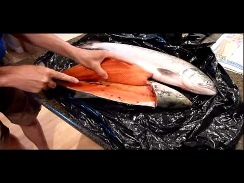 How to fillet a sockeye salmon