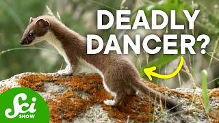 6 Remarkable Ways Animals Catch Their Food