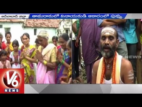 Kanipakam Ganesh Idol Found in a Leaf | Miracle | Adilabad - V6 News