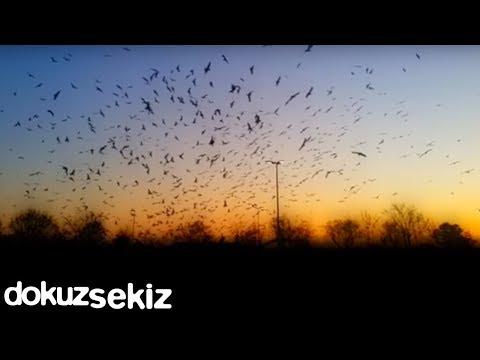 İclal Aydın - Göç / Çubuğum Yok (Enstrumantal) (Lyric Video)