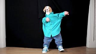Funny Dog Maymo Dancing