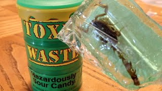 Toxic Waste Hazardously Sour Candy Challenge
