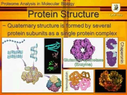 Proteome Analysis Part 01