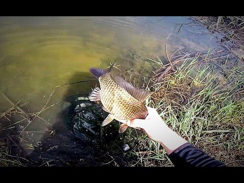 как ловить раков на реке москва