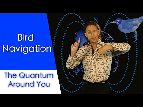 Bird navigation: The Quantum Around You