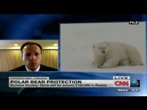 CNN news - polar bear protection