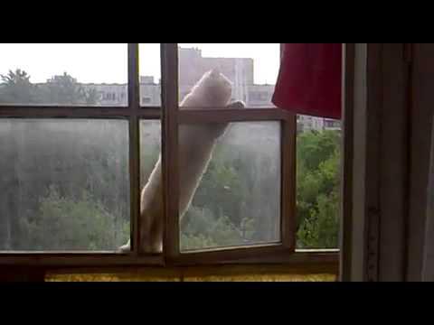 隣の家のニャンコがアパート6階の窓から侵入してきた映像