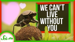 We Can't Live Without You | Synanthropic Animals