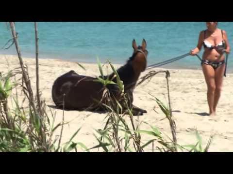 Girls Bathing With Horses - Ragazze Di Balneazione Con I Cavalli video