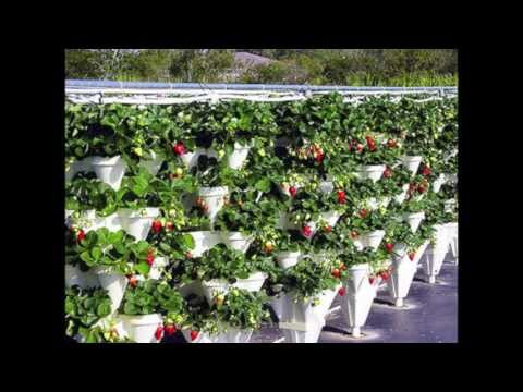 Hydroponic Vs Aeroponic Gardening Differences