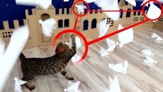 Kitten ATTACK on Ghost Town in Real Life.