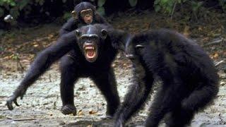 Vương quốc loài khỉ đột : Huynh đệ tương tàn - HD Thuyết minh tiếng việt