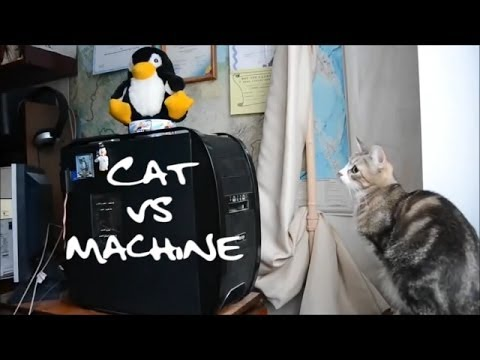 Cat vs Machine