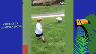 Funniest Animals and kids fails Compilation & Funny cat on the car dashboard  February 2019