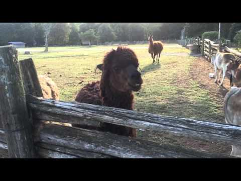 Lazy 5 Ranch. Sep 19 2015 #7